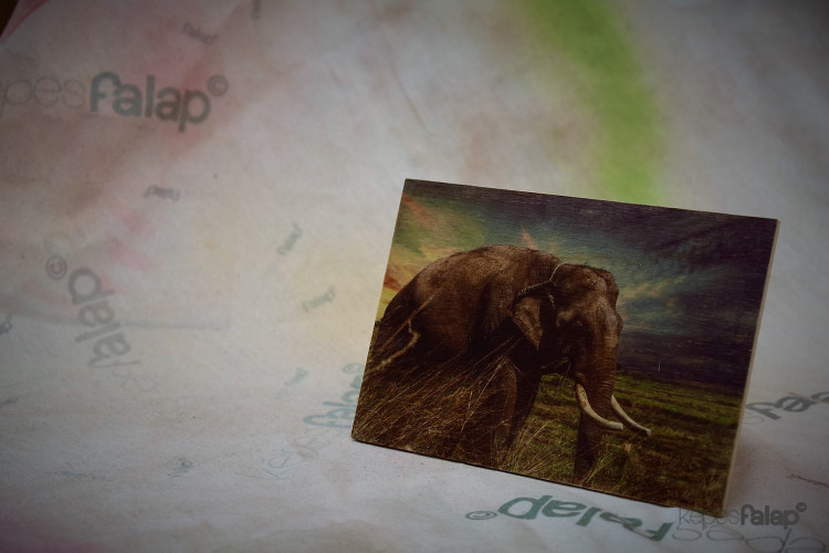 Állatos képesFalap - Elefánt