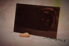 Állatos képesFalap - Macska