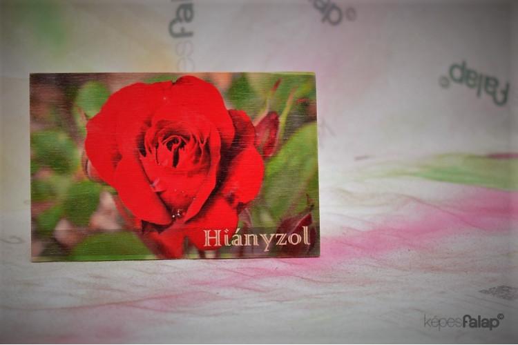 Hiányzol képesFalap - Vörös rózsa